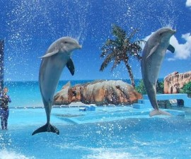 Dolphin Zoomarine Waterpark Algarve